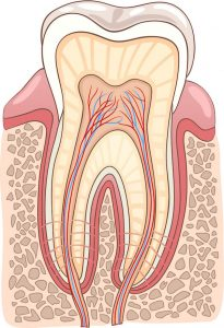 Root Canal Treatment Key Signs You May Need It Dentist Campbelltown